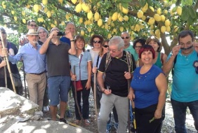 Amalfi Coast Lemon Tour